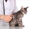 Ветеринарные клиники в Гордеевке